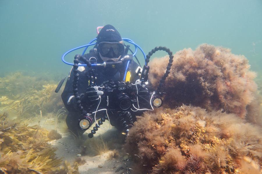 Dykker Filmer På Kystnært Stenrev