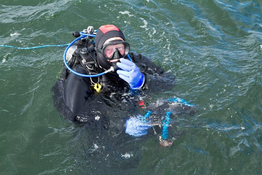 Dykker Klar Til At Dykke Ned