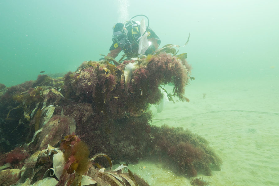 Dykker Undersøger Lille Boblerev I Kattegat